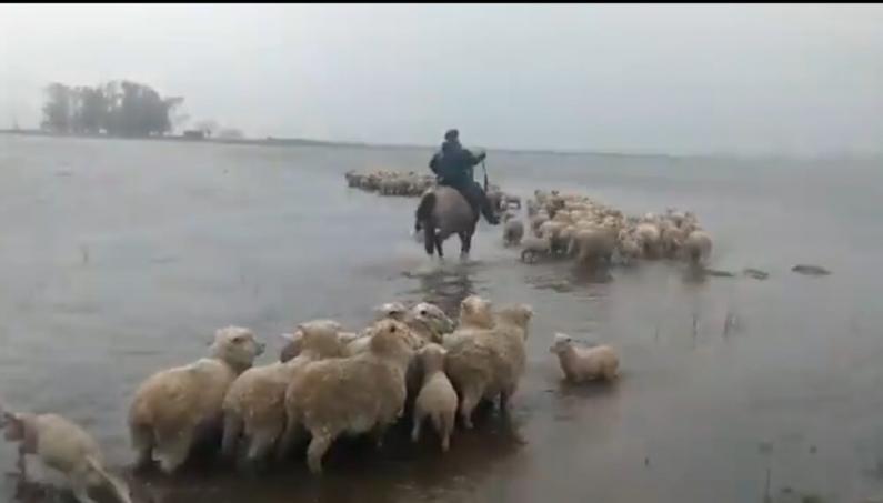 Buenos Aires: Se inundaron más de 300 mil hectáreas agrícolas