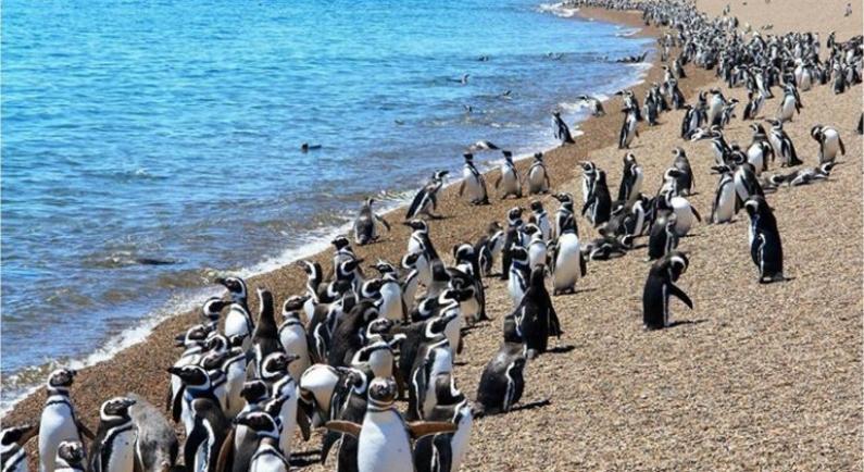 Chubut: Desde el sábado 15 se podrán ver los pingüinos en Punta Tombo