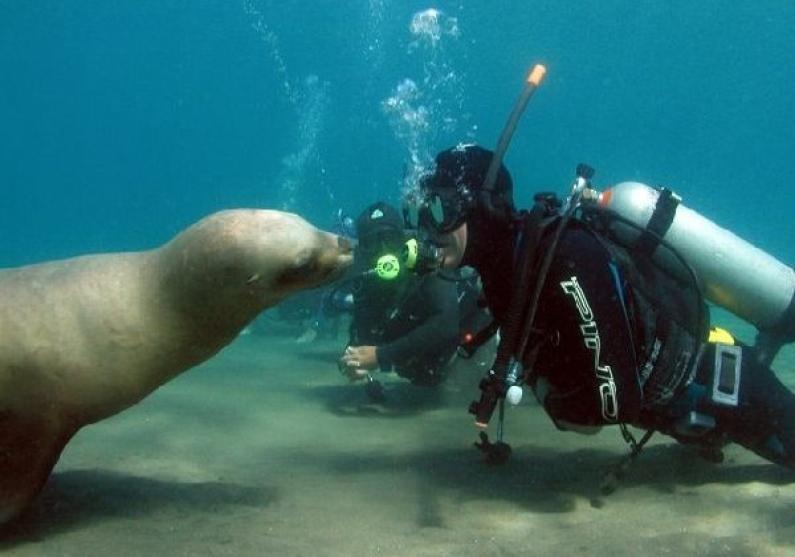 Chubut: Puerto Madryn fue destacada como uno de los mejores sitios para bucear