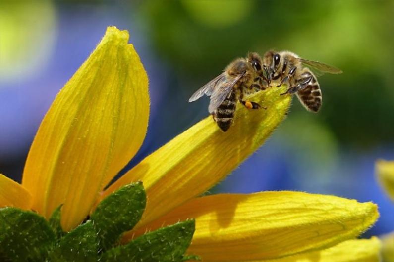 Colombia: La abeja, el ser vivo más importante del mundo está desapareciendo