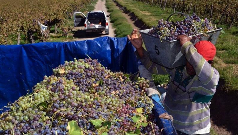 Con una norma menos, pero clave, se facilita el ingreso de uva Argentina a Brasil