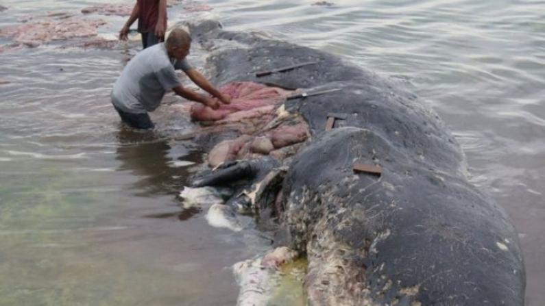 Indonesia: Las tristes e impresionantes imágenes de una ballena encontrada muerta con 115 vasos de plástico en el estómago