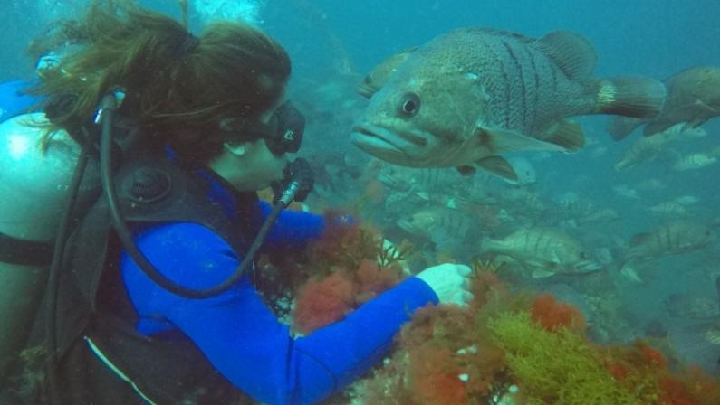 Proponen crear un parque submarino que incluye a Ushuaia para homenajear la gesta de Malvinas