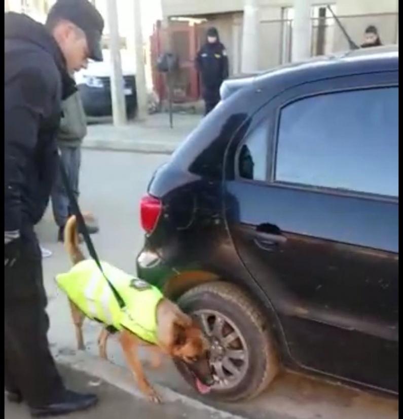 Tierra del Fuego: Un perro adiestrado de la policía de Río Grande  detectó drogas