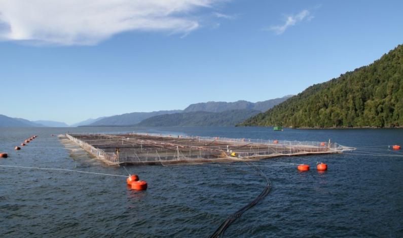 """Tierra del Fuego: Piden a ecologistas """"no adelantarse"""" sobre la posible instalación de salmoneras"""