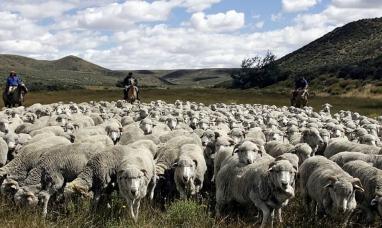 Alertan que la ley ovina no está en la agenda de diputados