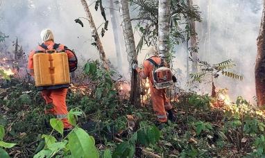 Argentina enviara ayuda para apagar los incendios en el Amazonas