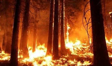 Bolivia: Incendio forestal en consume 450.000 hectáreas de bosque en Santa Cruz