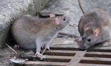 Buenos Aires: Ya son dos casos de hantavirus en la provincia