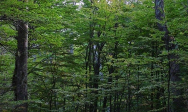 Chubut: Anulan la venta de tierras con bosques nativos