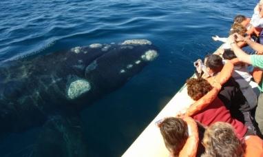 Chubut: El avistaje de ballenas de península Valdés está entre los mejores del mundo
