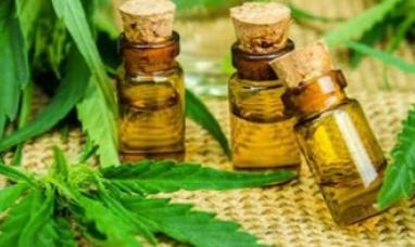 Chubut: El gobierno quiere producir aceite de cannabis para vender en todo el país