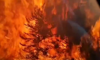 """Chubut: Por los incendios declaran la """"emergencia agropecuaria"""""""