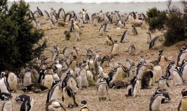 Chubut: Todo preparado para una nueva vigilia de pingüinos y ballenas
