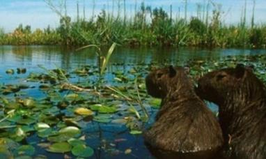 Corrientes: Los esteros del Iberá no fueron elegidos como una de las siete maravillas naturales de Argentina