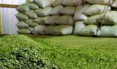 Desde el ministerio de agricultura fijaron el nuevo precio de la yerba mate