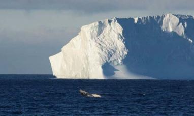 Un iceberg de 1.600 kilómetros cuadrados se desprende de la Antártida