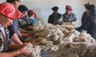 La lana patagónica llega a Turquía