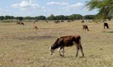 """Las provincias de Chaco y Catamarca fueron declaradas en """"emergencia agropecuaria"""""""