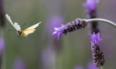 Los insectos del planeta están en peligro y es más grave de lo que se creía