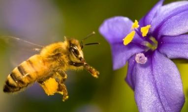 """Un """"mapa de abejas"""" muestra las más de 20 mil especies que existen en el mundo"""