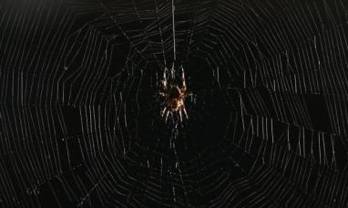 Por qué no deberías matar las arañas que encuentras en casa