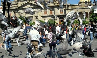 ¿Por qué hay tantas palomas en el mundo?