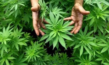 La primera futura doctora en cannabis de Argentina es patagónica por elección