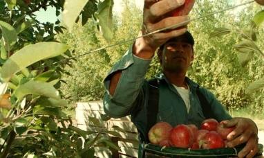 Productores frutícolas de Río Negro y Neuquén pidieron medidas ante la llegada de trabajadores migrantes