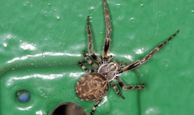 Si no quiere atraer a las arañas no se vista de este color