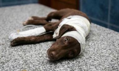 Córdoba: Tiene fecha el juicio oral al peluquero acusado de despellejar vivo a un perrro