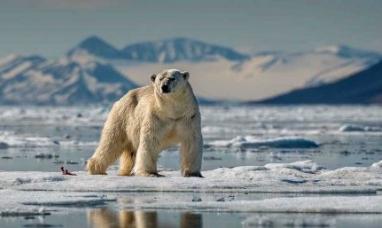 EE.UU.: Un tercio de las especies animales y vegetales se extinguirán en 50 años, según universitario