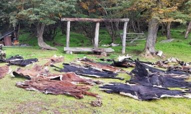 Tierra del Fuego: Allanaron dos campos en una investigación por abigeato en Tolhuin