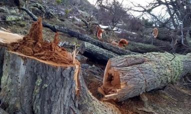 Tierra del Fuego: Ambientalistas horrorizados por el desmonte