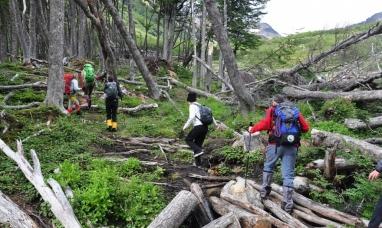 Tierra del Fuego: Buscan cobrar rescate a turistas extranjeros que se pierdan haciendo caminatas por el bosque