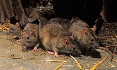 Tierra del Fuego: Desde el ministerio de salud aseguran que no hay circulación de Hanta virus
