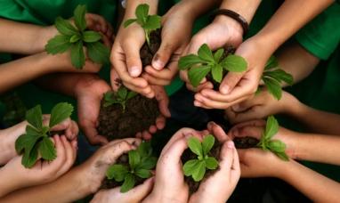 Tierra del Fuego: Frente al aumento de impuestos municipales concejal de Río Grande  dice que hay que plantar árboles para tener un descuento