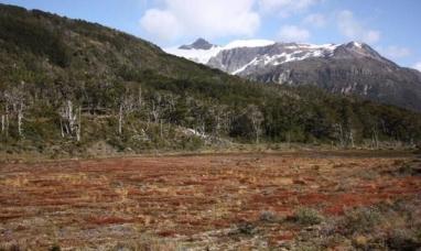 Tierra del Fuego: Funcionarios del ministerio de industria visitaron la planta que industrializará turba