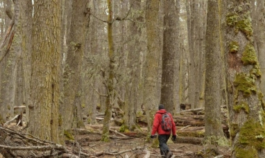 Tierra del Fuego: El gobierno realiza diversos trabajos para la conservación del bosque