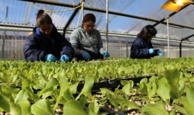 """Tierra del Fuego: En Río grande las """"Huertas urbanas"""", solo producen lechugas"""