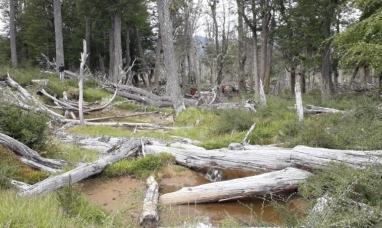 """Tierra del Fuego: Hallan un cuerpo en el cerro """"Michi"""" y buscan determinar si se trata del turista desaparecido hace seis meses"""