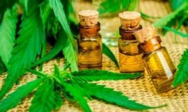 Tierra del Fuego: Legisladores modifican ley votada en 2018 sobre el cannabis medicinal y agregan artículos vetados por la anterior gestión