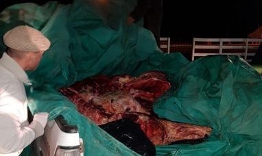 Tierra del Fuego: Nuevo decomiso de carne vacuna faenada en forma ilegal