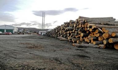 Tierra del Fuego: Productores madereros le plantearon al intendente de Tolhuin las problemáticas del sector