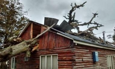 Tierra del Fuego: Un árbol aplastó una oficina pública en Tolhuin