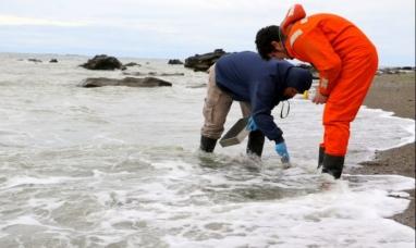 Tierra del Fuego: La secretaria de obras públicas del municipio de Río Grande dice que el agua no está contaminada