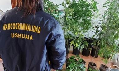 Tierra del Fuego: Secuestran en Ushuaia 32 plantas de marihuana en un allanamiento
