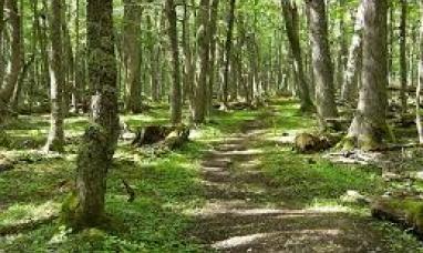 Tierra del Fuego: Se suscribió el compromiso patagónico para el manejo sustentable de bosques y ganadería