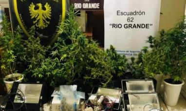 Tierra del Fuego: En Río Grande, usaban dos viviendas del IPV como viveros de marihuana