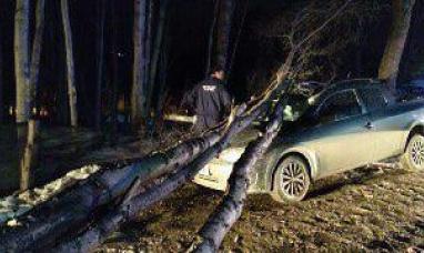 Tierra del Fuego: El viento derribó un árbol en Ushuaia, y cayó sobre un auto estacionado